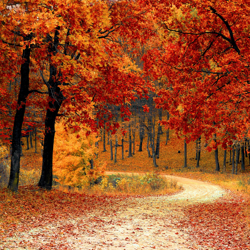 Wooded Autumn trail.